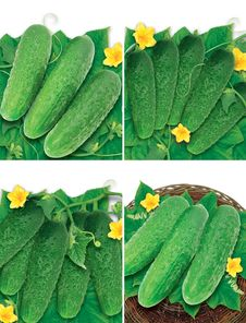 Set Of Cucumbers Royalty Free Stock Photography