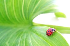Free Beetle On A Green Leaf Royalty Free Stock Image - 15073626