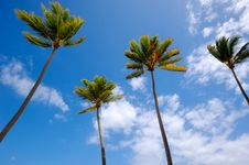 Free Palms Royalty Free Stock Photos - 15073778