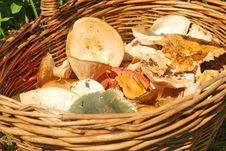 Free Various Fresh Summer Mushroom Royalty Free Stock Images - 15074149