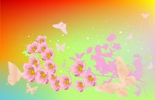 Free Cherry Flowers And Butterflies Stock Photos - 15074453