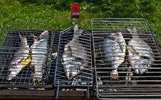 Fish On A Grill Stock Photos
