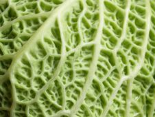 Free Cabbage Leaf Royalty Free Stock Photo - 15075355