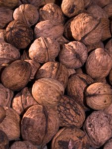 Free Walnut Stock Image - 15075531