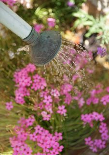 Free Watering Flowers Stock Photos - 15075963