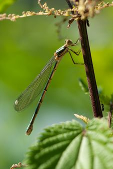 Free Side View Of Dragonfly Royalty Free Stock Photography - 15076017