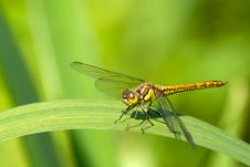 Free Dragonfly On The Leaf Stock Photos - 15076023