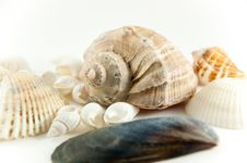 Free Shells Royalty Free Stock Image - 15076076
