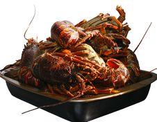 Free Crayfish Stock Images - 15076754
