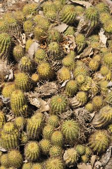 Free Cactus Stock Image - 15077261