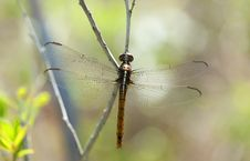 Free Dragonfly Royalty Free Stock Photos - 15077818