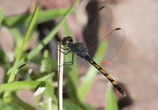 Free Dragonfly Stock Photo - 15077850