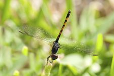 Free Dragonfly Royalty Free Stock Photography - 15077887
