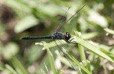Free Dragonfly Royalty Free Stock Photo - 15077905