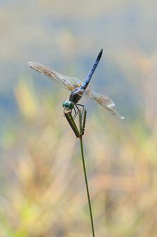 Free Dragonfly Stock Photo - 15078010