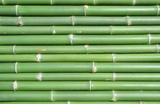Free Bamboo Royalty Free Stock Photo - 15079315