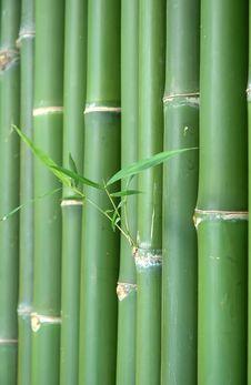 Free Bamboo Stock Image - 15079331