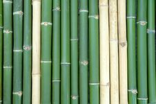 Free Bamboo Royalty Free Stock Images - 15079369