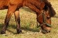 Free Horse Stock Photos - 15080583