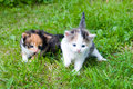 Free Two Little Kittens Royalty Free Stock Photos - 15082228