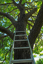 Free Ladder Going Up To Tree Royalty Free Stock Photos - 15089848