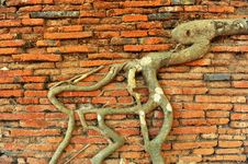 Free Brick Wall And Root Stock Images - 15080094