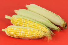 Free Yellow Corn Collection Stock Images - 15080614
