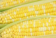 Free Corn Royalty Free Stock Image - 15080656