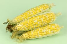Free Yellow Corn Collection Royalty Free Stock Photo - 15080995