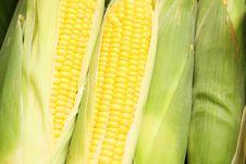 Free Fresh Corns Stock Images - 15081044
