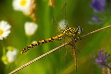 Free Colorful Dragonfly On A Colorful Lawn Stock Image - 15081211