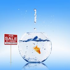 Free Fish In An Aquarium Royalty Free Stock Image - 15081606