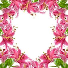 Free Frame Of Pink Lilies Stock Image - 15082111