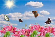 Pink Lilies And A Butterflies Stock Photography