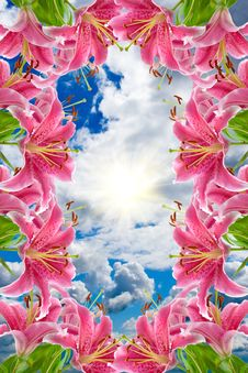 Free Frame Of Pink Lilies Stock Images - 15082204
