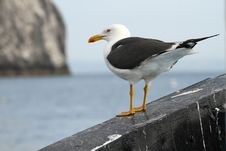 Free Sea Gull Sitting On A Boat Stock Photo - 15083680