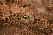 Free Little Green Bug Stock Images - 15085454