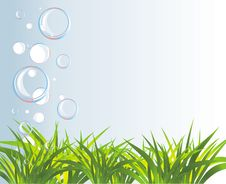 Free Bubbles And Grass Royalty Free Stock Photos - 15085478