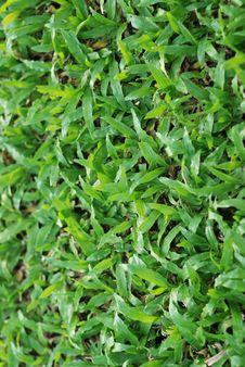 Free Green Grass I Stock Image - 15085511