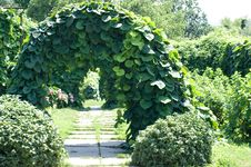 Free Garden Green Arch Royalty Free Stock Photo - 15086475