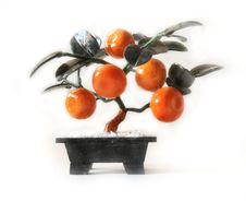 Free Tangerine Tree Stock Images - 15086604