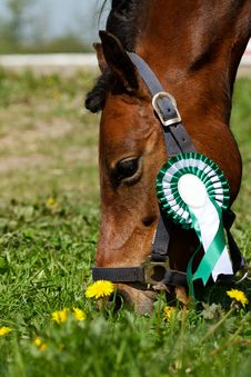 Free Pony With Green Rosette Stock Image - 15087271