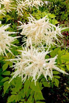 Free Flowers Stock Photos - 15087543