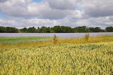 Free An English Rural Landscape Of Flax And Wheat Stock Images - 15087554