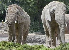 Free African Elephant 2 Stock Photo - 15088040