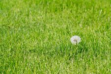 Free Dandelion Royalty Free Stock Image - 15088176