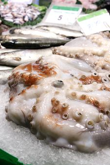 Free Octopus In Ice Royalty Free Stock Photo - 15088375