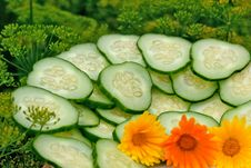 Free Green Cucumber Stock Photography - 15088732