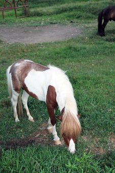 Free Horse Stock Photos - 15089653
