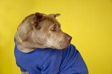Free Dog Portrait Royalty Free Stock Photography - 15089687